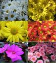 flowers-in-baguio.jpg